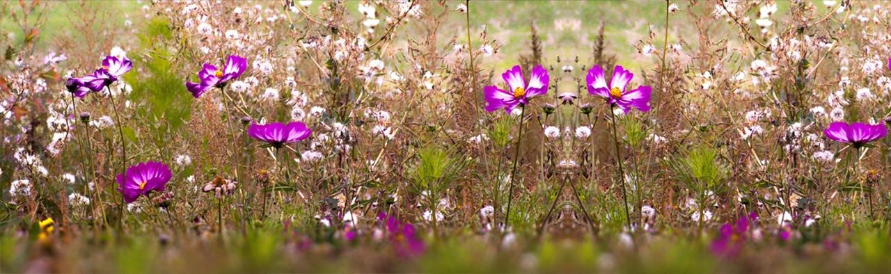 fleurs dans les champs